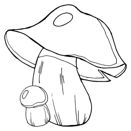 Mushroom icon. Vector illustration of autumn mushrooms. Hand drawn mushrooms in the forest.