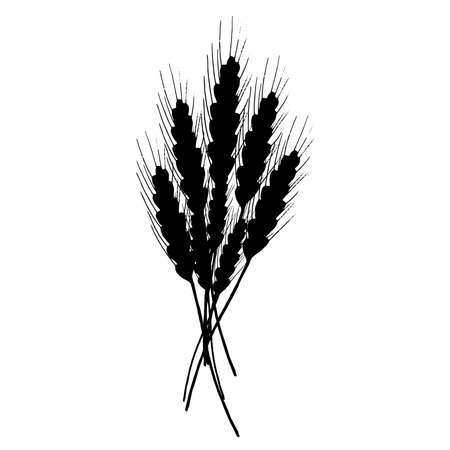 Wheat icon. Vector illustration of ears of wheat. Hand drawn wheat.