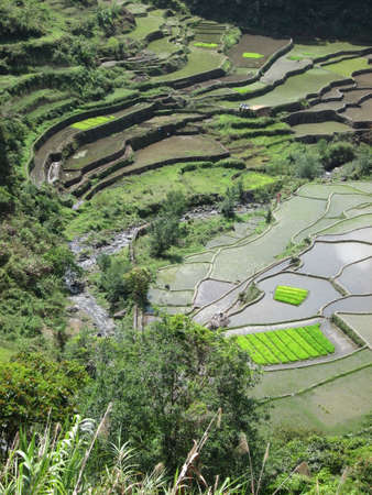 rice terraces: Rice terraces near Banaue Philippines
