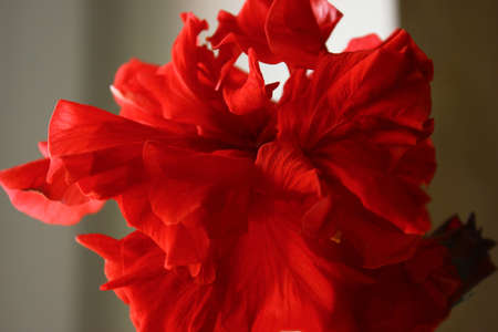 A beautiful flower bewitches its splendor Stock Photo