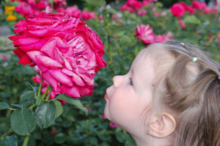 Adorable girl wants to kiss a blossoming rose