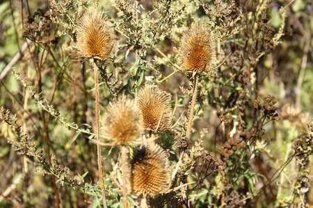 Plantes sèches dans les rayons du coucher du soleil Banque d'images - 86269374