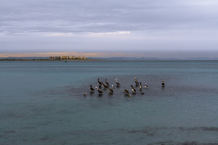 Landscape with marine birds, you marry and the late afternoon. Banco de Imagens