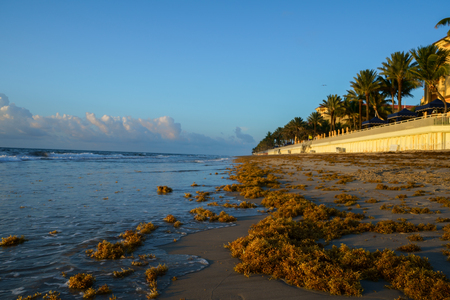 It dawns and a lot of sargassum arrives at the beach.