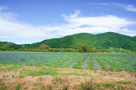 Natural landscape where peasants are spraying the field. Stok Fotoğraf