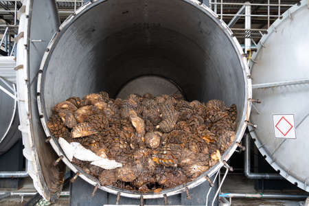 There are many pieces of cooked agave inside the tank of the tequila factory.
