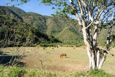 In the green field there are many horses that are grazing. 免版税图像
