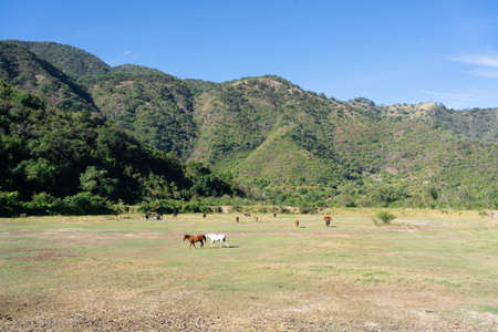 In the green field there are many horses. 免版税图像