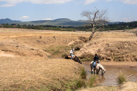 The horses are drinking water from the stream.
