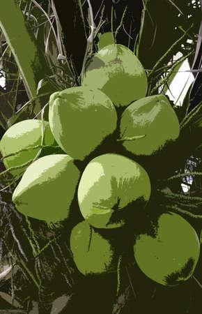 coconut grove green coconut  illustration Stock Photo
