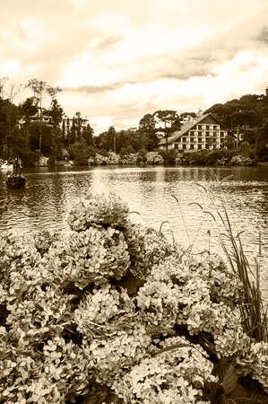 park black lake city Gramado Brazil hydrangea macrophylla flowers  vegetation nature vintage