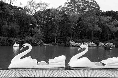 white swan pedal boat activity outdoors lake leisure black lake city Gramado Brazil black white