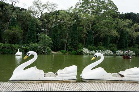 white swan pedal boat activity outdoors lake leisure black lake city Gramado Brazil