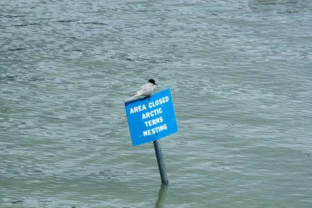 Area closed artic terns nesting sign bird Stock Photo