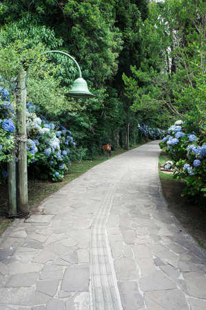 Black lake park road track  Hydrangea vegetation  city Gramado Brazil