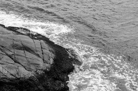 rock stone water ocean mussel shellfish  black white