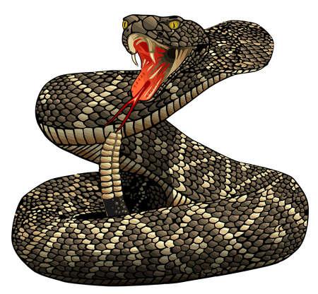 rattlesnake posion serpent animal wildlife danger illustration