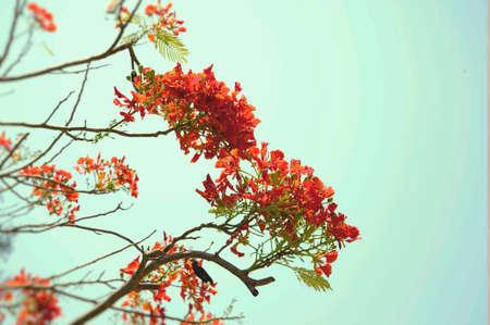 reds: Blossom red flowers
