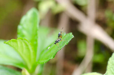 insect on leaf: insect yoga on green leaf Stock Photo