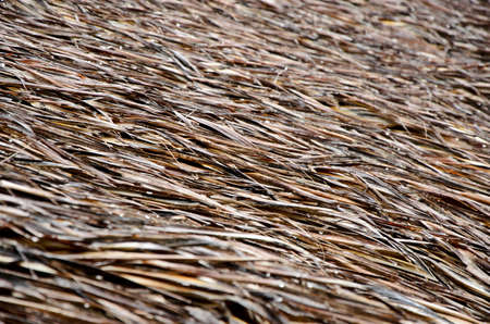 thatched: Detail of thatched roof.