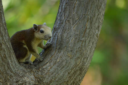 Squirrel is a mammal. A small body size Shaggy, covered the entire body, round black eyes, bushy tail swells are classified as rodents in the family Sciuridae.