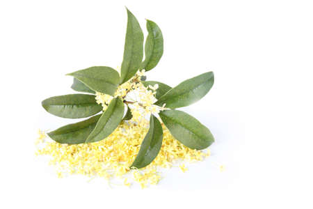 reverie: some osmanthus flower and leaves with white background Stock Photo