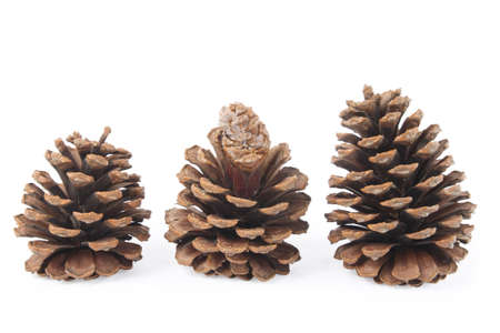 pine three: three pine cone with white background Stock Photo