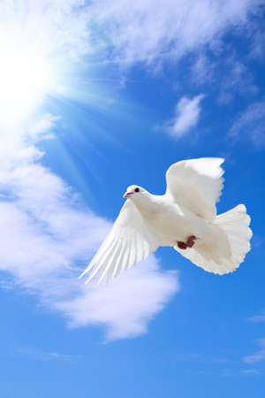 a free flying dove under the blue sky