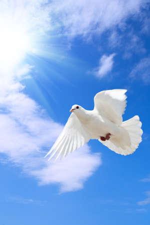 eine frei fliegenden Taube unter dem blauen Himmel