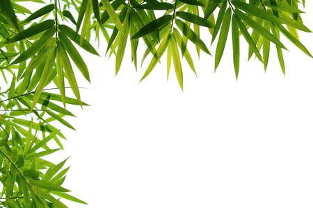 japones bambu: hojas de bamb� aislados en blanco