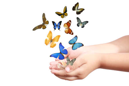 small hand and colorful butterflies isolated on white  photo