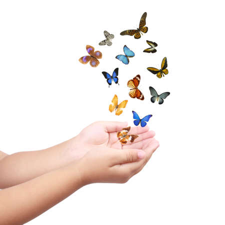 colorful butterflies and small hand isolated on white  Stock Photo