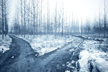 forked: winter landscape with snow and forked road in the forest Stock Photo