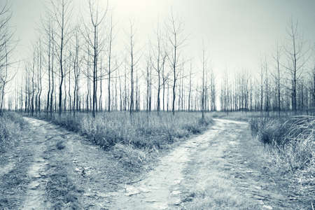 forked: abstract landscape with forked road in the forest at bleak autumn Stock Photo