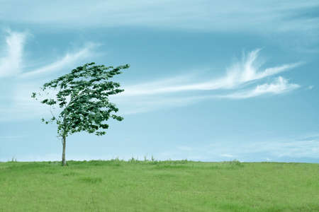 wind farm: small tree in the wind with sky Stock Photo