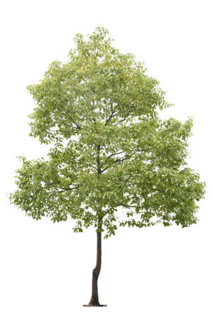 small tree isolated on white Stock Photo - 8859025