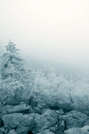 rime ice on the tree with fog background photo