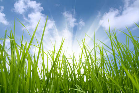 green grass and sun,environmental protection concept photo