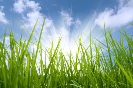 environmental: green grass and sun,environmental protection concept Stock Photo