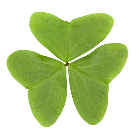 three leaf clover isolated on white Stock Photo - 9345231