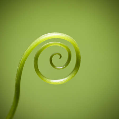 curly twig against green background,details of the nature  photo
