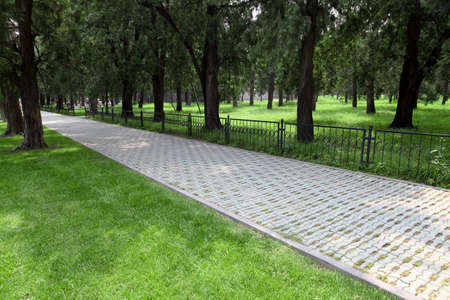 community garden: footpath through green lawn and tall trees