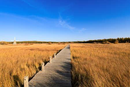wooden footbridge across the wetland against a blue sky at autumn Stock Photo - 10798392