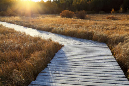 wooden footbridge across the wetland ,autumn landscape at dusk photo