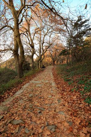defoliation: autumn defoliation covered with climbing path