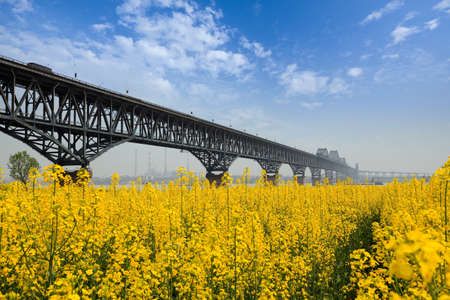 bridge in spring ,rape flowers with blue sky at yangtze river Stock Photo - 13034300