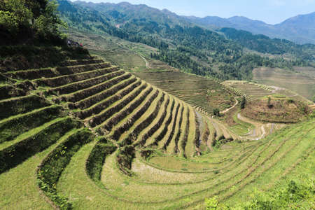 terracing: the terracing in spring ,farming civilization of  beautiful curves and lines