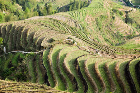 terraced fields scenery in longsheng county,guangxi province, China photo