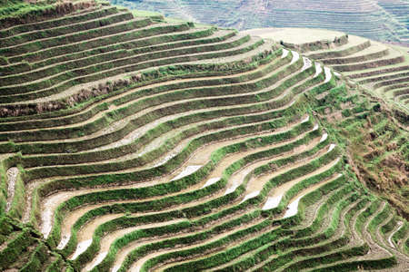 rice terraces in springtime,agricultural background photo