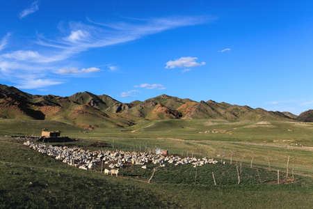 sheeps in sheepfold on mountain slope at dusk,inner mongolia,China